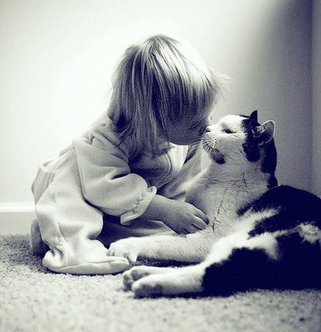 ネコ,ラブリー,kiss,画像,まとめ007