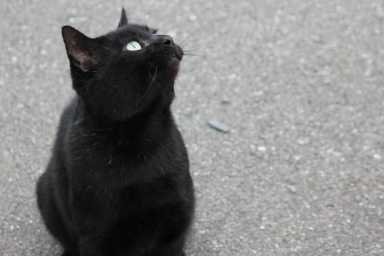 癒し,黒猫,画像,まとめ011
