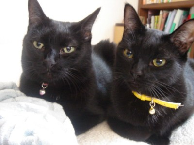 癒し,黒猫,画像,まとめ015