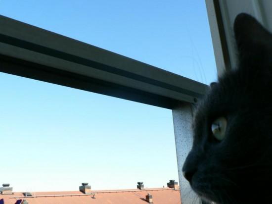 癒し,黒猫,画像,まとめ016