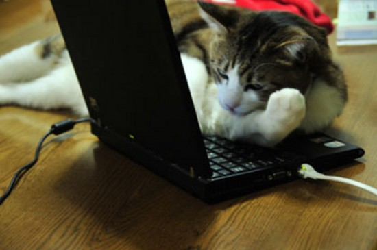 PC作業,邪魔,猫,画像,まとめ019
