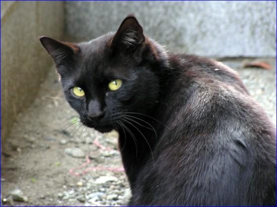 癒し,黒猫,画像,まとめ019