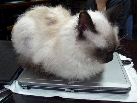 PC作業,邪魔,猫,画像,まとめ020