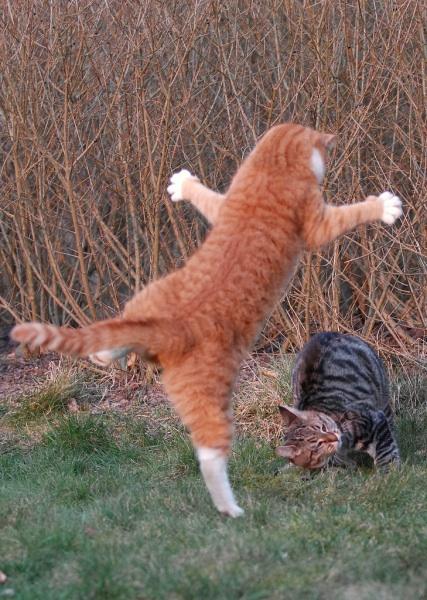 爆笑,にゃんこ,ネコ,猫,画像,まとめ020