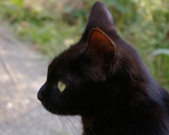 癒し,黒猫,画像,まとめ021