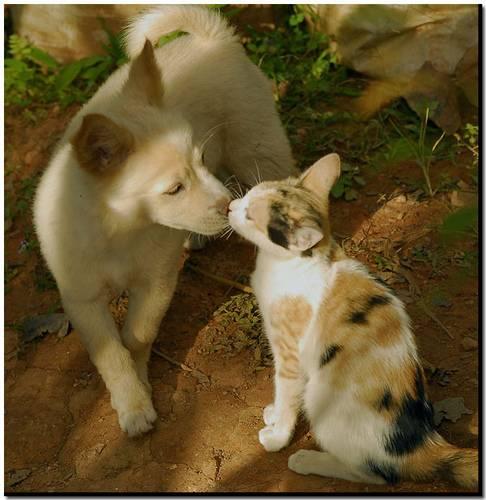 ネコ,ラブリー,kiss,画像,まとめ023