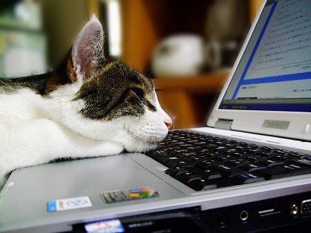 PC作業,邪魔,猫,画像,まとめ028