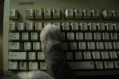 PC作業,邪魔,猫,画像,まとめ035