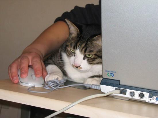 PC作業,邪魔,猫,画像,まとめ037