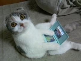 爆笑,にゃんこ,ネコ,猫,画像,まとめ042