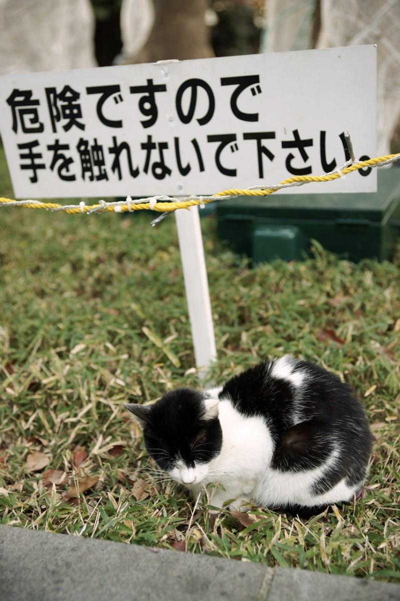 爆笑,にゃんこ,ネコ,猫,画像,まとめ043