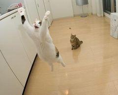 爆笑,にゃんこ,ネコ,猫,画像,まとめ046