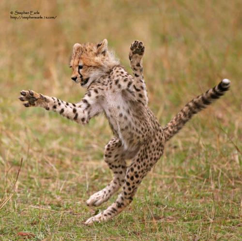 爆笑,にゃんこ,ネコ,猫,画像,まとめ047