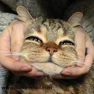 爆笑,にゃんこ,ネコ,猫,画像,まとめ059