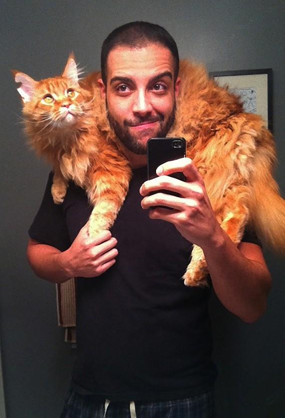 ネコ,イケメン,猫,画像,まとめ079