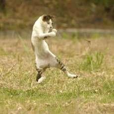 爆笑,にゃんこ,ネコ,猫,画像,まとめ091