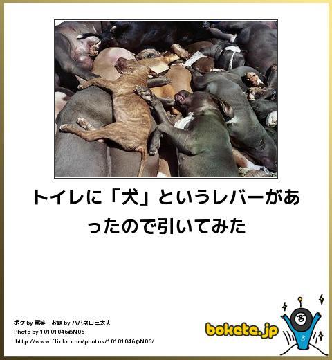 犬,bokete,秀逸,ボケ,まとめ003