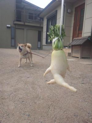 思わず吹き出してしまう,犬,おもしろ,画像,まとめ003
