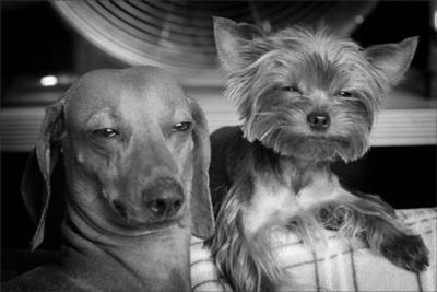 思わず吹き出してしまう,犬,おもしろ,画像,まとめ006