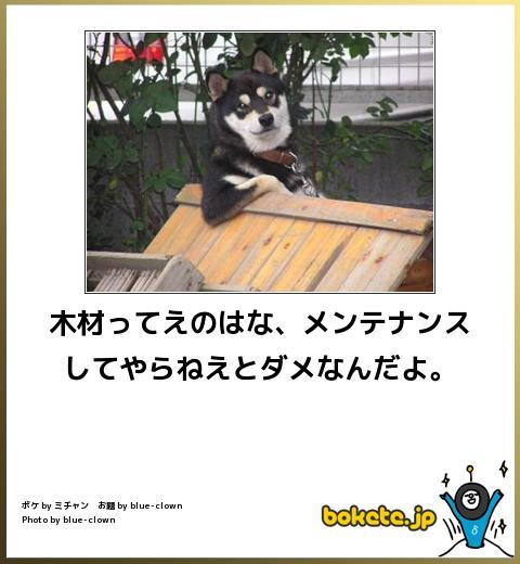 犬,bokete,秀逸,ボケ,まとめ015
