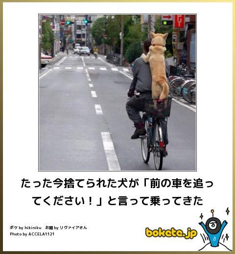 犬,bokete,秀逸,ボケ,まとめ022