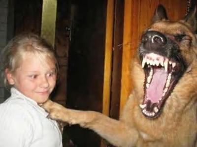 思わず吹き出してしまう,犬,おもしろ,画像,まとめ025