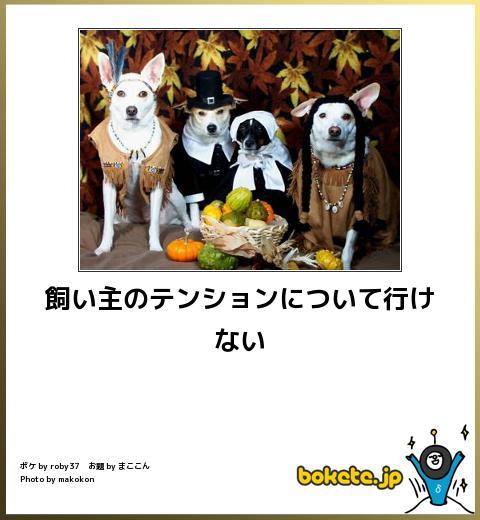 犬,bokete,秀逸,ボケ,まとめ026
