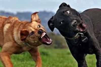 思わず吹き出してしまう,犬,おもしろ,画像,まとめ045