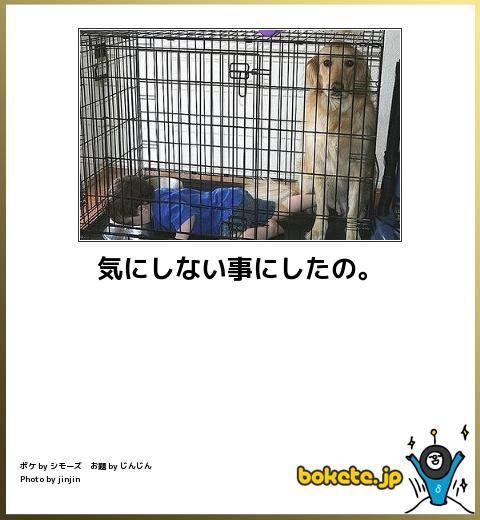 犬,bokete,秀逸,ボケ,まとめ066