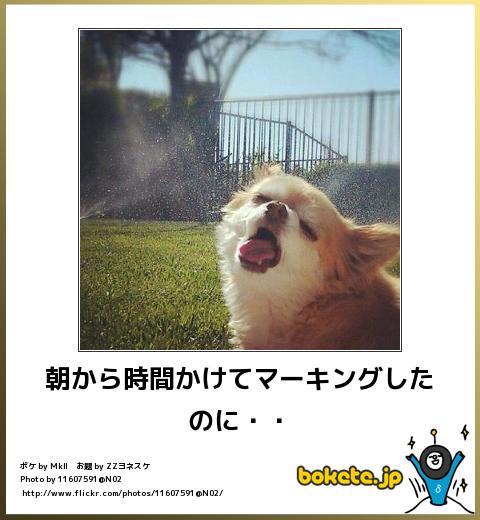 犬,bokete,秀逸,ボケ,まとめ072