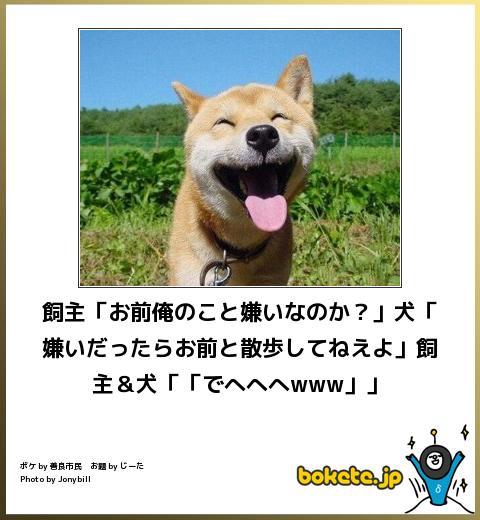 犬,bokete,秀逸,ボケ,まとめ091