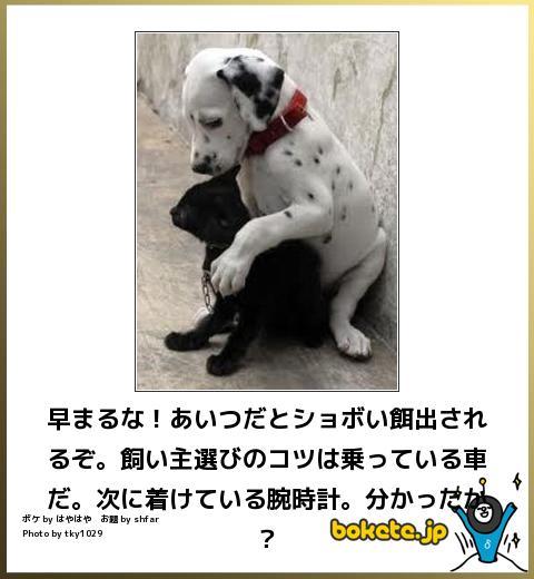 犬,bokete,秀逸,ボケ,まとめ121
