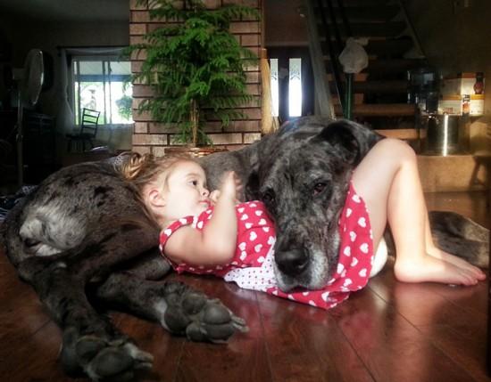 犬,こども,癒し,画像,まとめ001