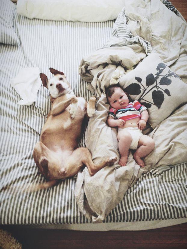 子供,大好き,癒される,子守犬,画像,まとめ001