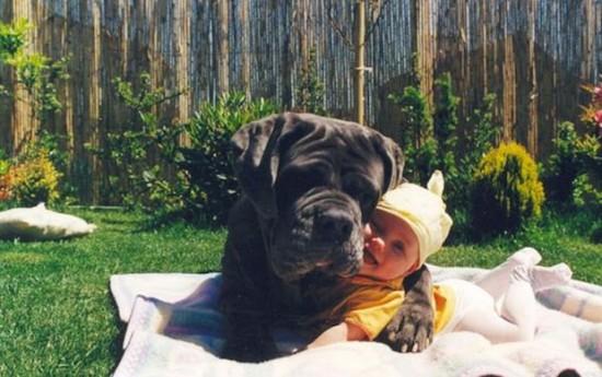 犬,こども,癒し,画像,まとめ002