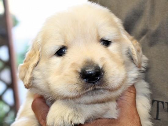 悶絶,可愛い,大型犬,画像,まとめ002