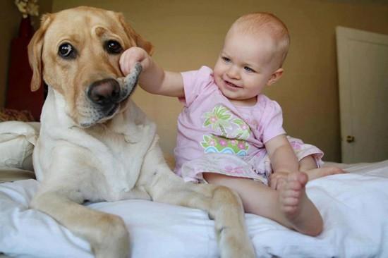 犬,こども,癒し,画像,まとめ003