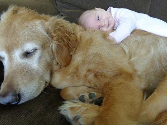 犬,こども,癒し,画像,まとめ004