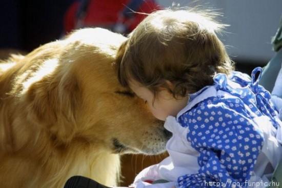 子供,大好き,癒される,子守犬,画像,まとめ004