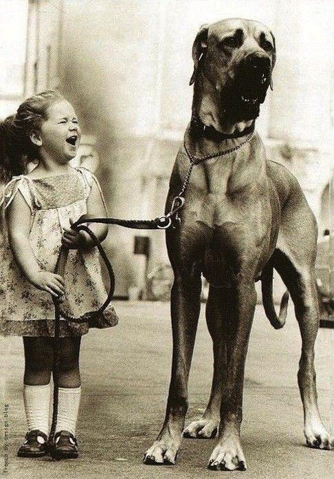 子供,大好き,癒される,子守犬,画像,まとめ005