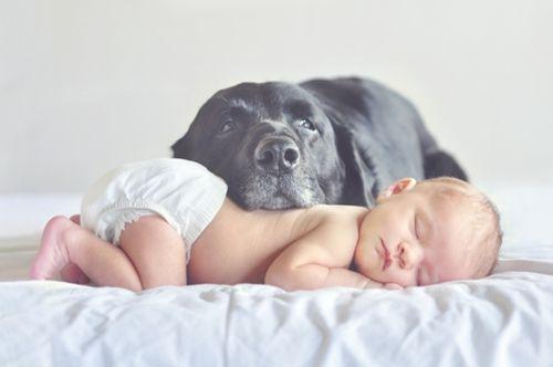 子供,大好き,癒される,子守犬,画像,まとめ006