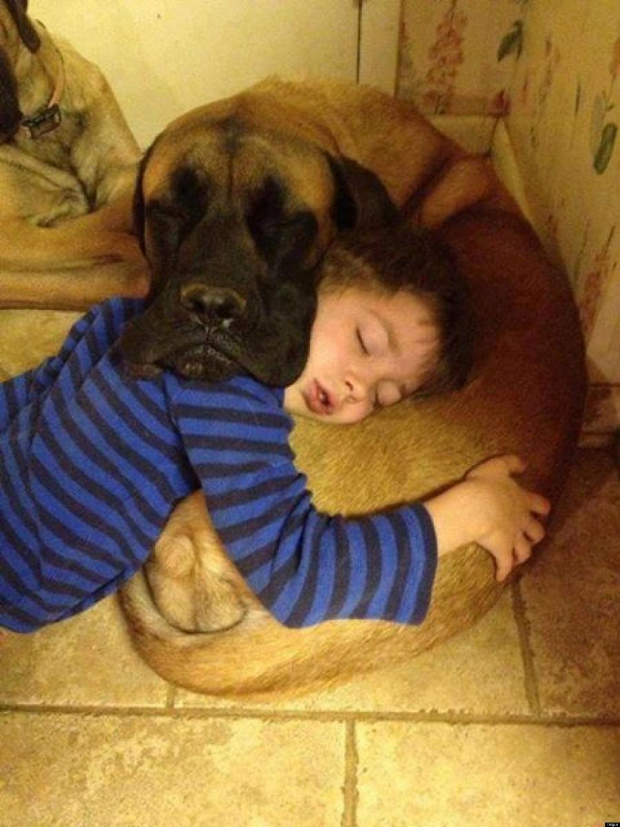 犬,こども,癒し,画像,まとめ010