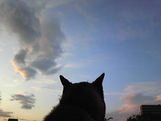 萌え過ぎる,柴犬,後頭部,画像,まとめ010