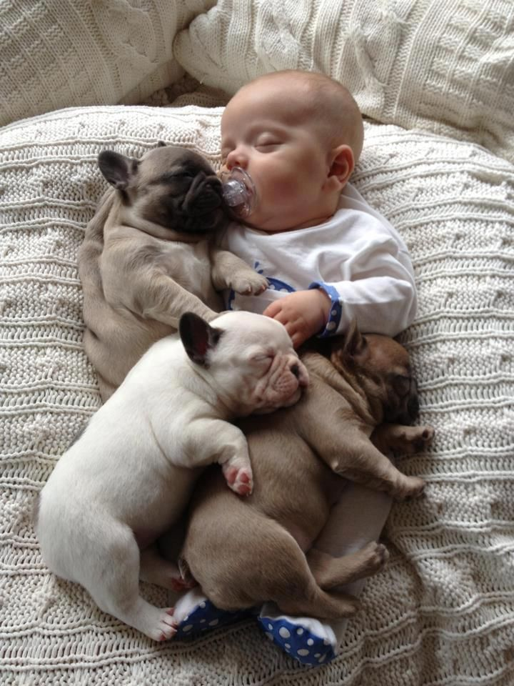 子供,大好き,癒される,子守犬,画像,まとめ010