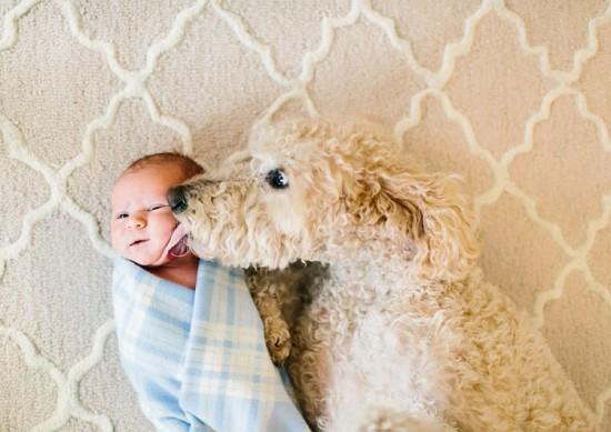 犬,こども,癒し,画像,まとめ011