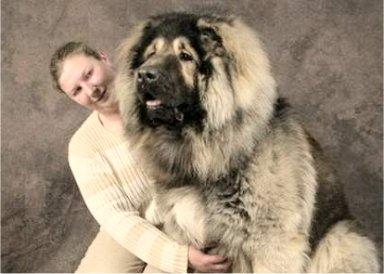 悶絶,可愛い,大型犬,画像,まとめ011