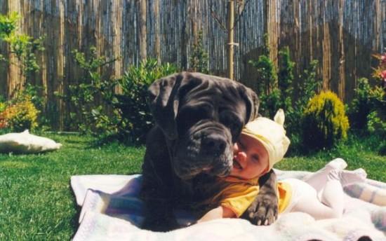 子供,大好き,癒される,子守犬,画像,まとめ012