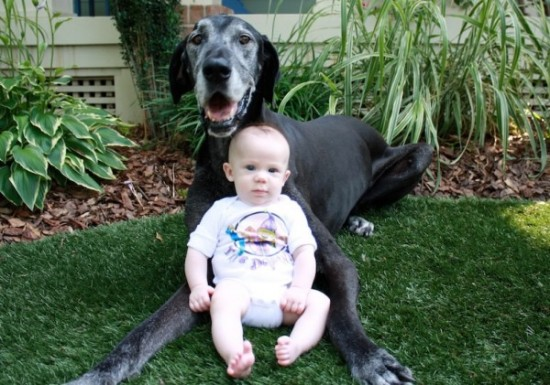 犬,こども,癒し,画像,まとめ014