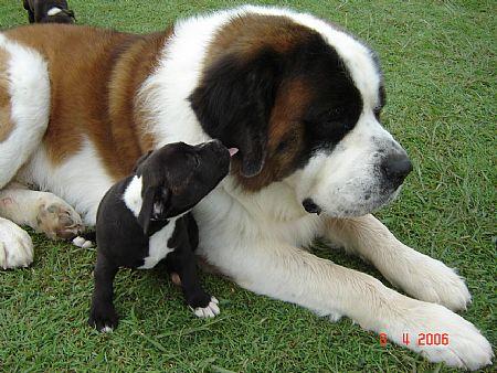 悶絶,可愛い,大型犬,画像,まとめ014