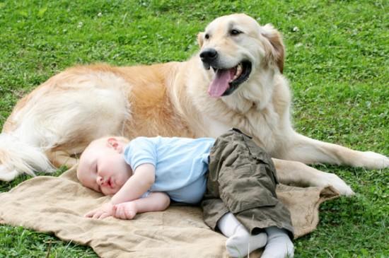子供,大好き,癒される,子守犬,画像,まとめ014